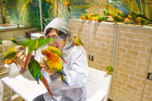 """""""【4位:鳥のいるカフェ】浅草の「鳥のいるカフェ」はそんじょそこらの動物系カフェとはレベルが違う。アニマルパニック映画さながらのアグレッシブさで、小鳥たちが群がってくるぞ! https://t.co/Pu2FHF6vQH"""""""