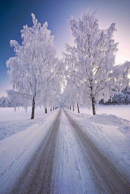 Snowy day ~ Dreamy Nature:
