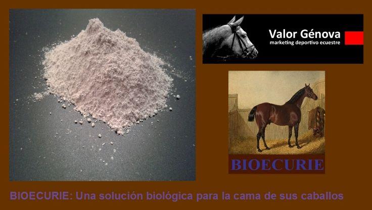 BIOECURIE, un producto específico para las cuadras