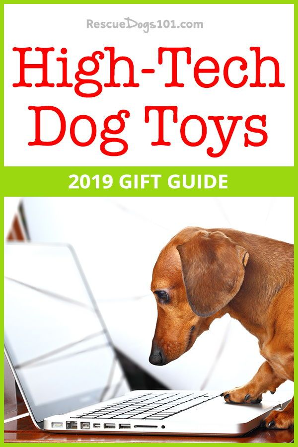 27 Cool Dog Gadgets Your Dog Will Love Dog Toys Dog Gadgets Dogs