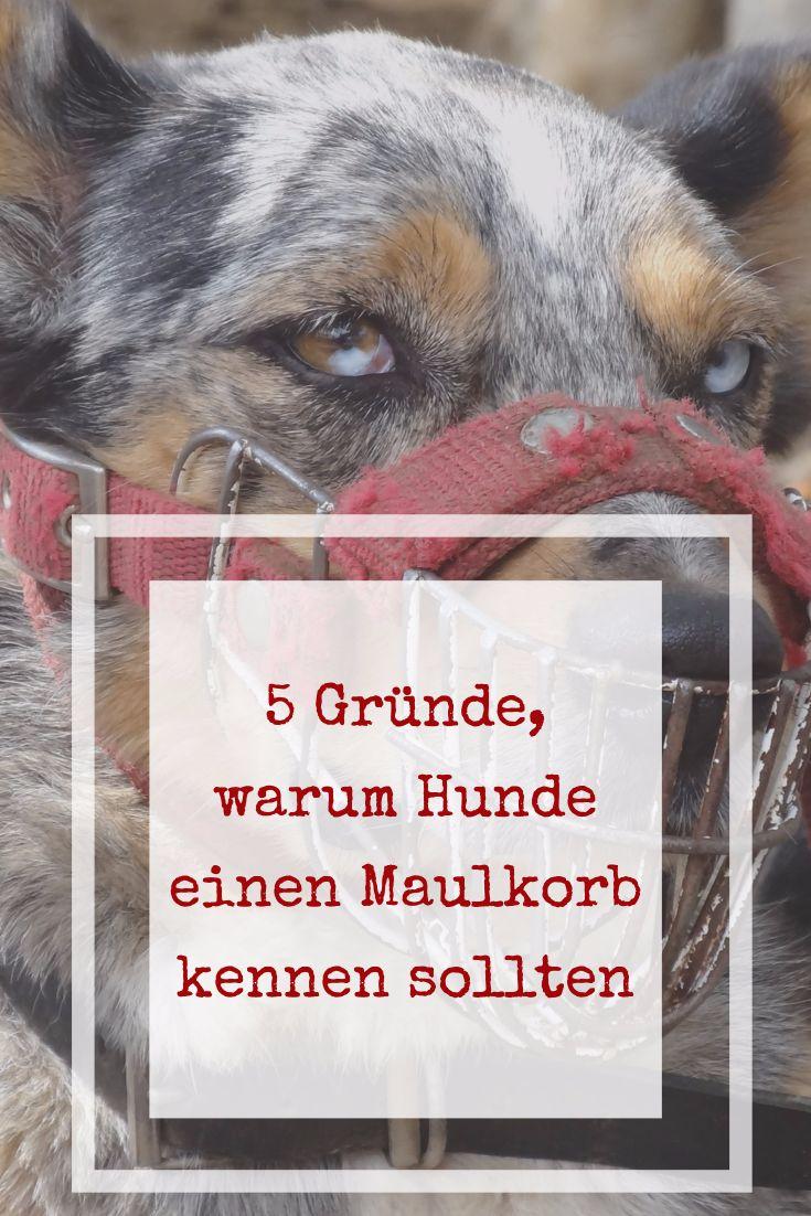 5 Gründe, warum Dein Hund einen Maulkorb kennen sollte