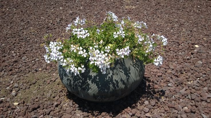 plant pot from a flipped tire