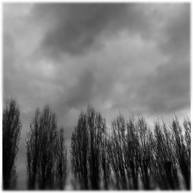 うちの最寄り駅から見えるほうきみたいな木。イギリスらしい空を添えて(お料理キャプション・モード)。EF, via Flickr.