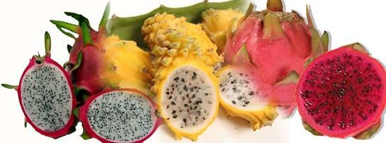 Dragon fruit not only is rich in vitamin C and antioxidants but also in protein and monounsaturated fats. #dragonfruits #anioxidants #monounsaturatedfats
