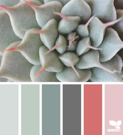 { succulent tones } -- from Fresh Hues blog, 01july2014