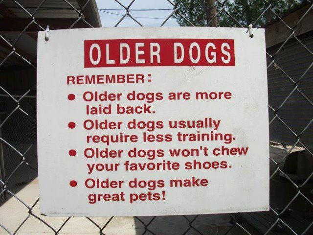 Adopt a senior pet!