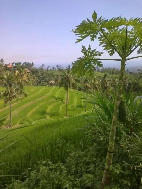 Bali, Buleleng - Panji : At garden