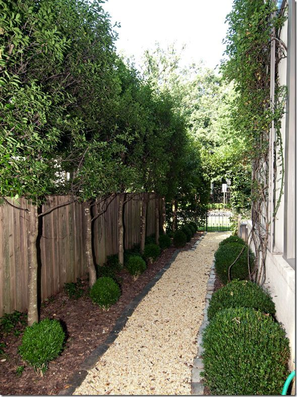 168 best images about side yard landscaping ideas on pinterest for Narrow trees for tight spaces