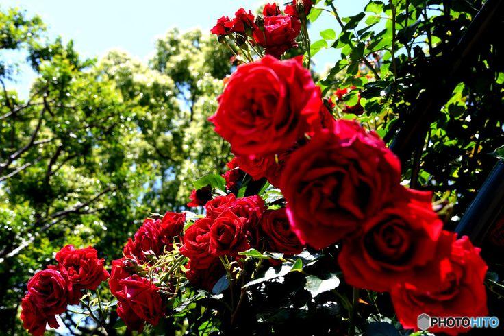 植物とイルミネーションに魅せられて地上に舞い降りた楽園なばなの里