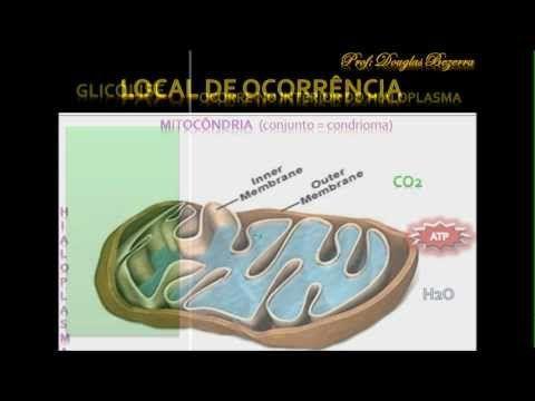 Respiração Anaeróbica e Aeróbica - Profº Fernando Teixeira - BIOVESTIBA.NET - YouTube