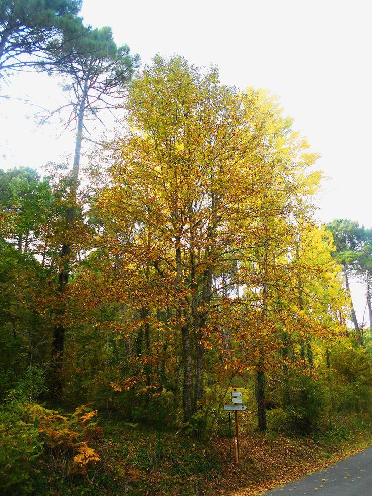 Colores del otoño en el Camino deS an Pedro de Alcántara.