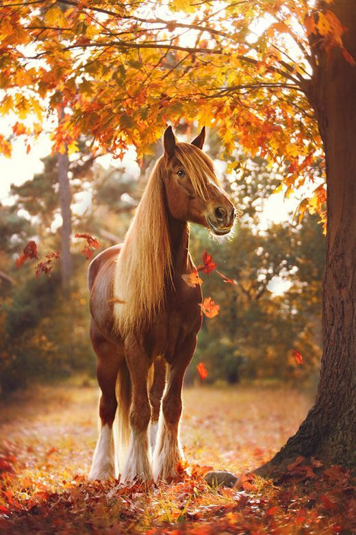 A horse in the autumn leaves.