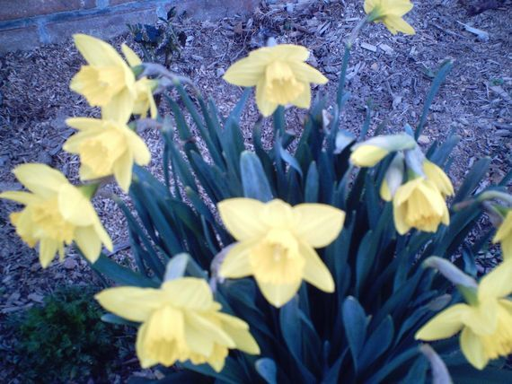The Vernal Equinox: dates, folklore, facts, and photos about the start of spring!