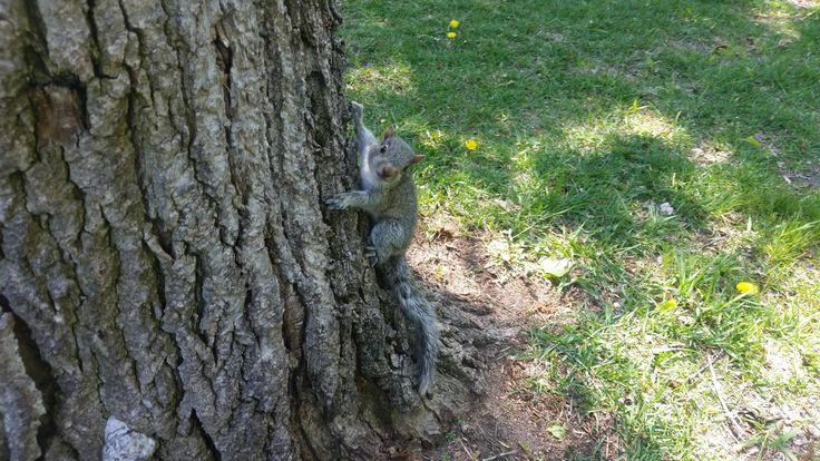 Baby squirrel who lives in the park nearby http://ift.tt/2pI6hC1