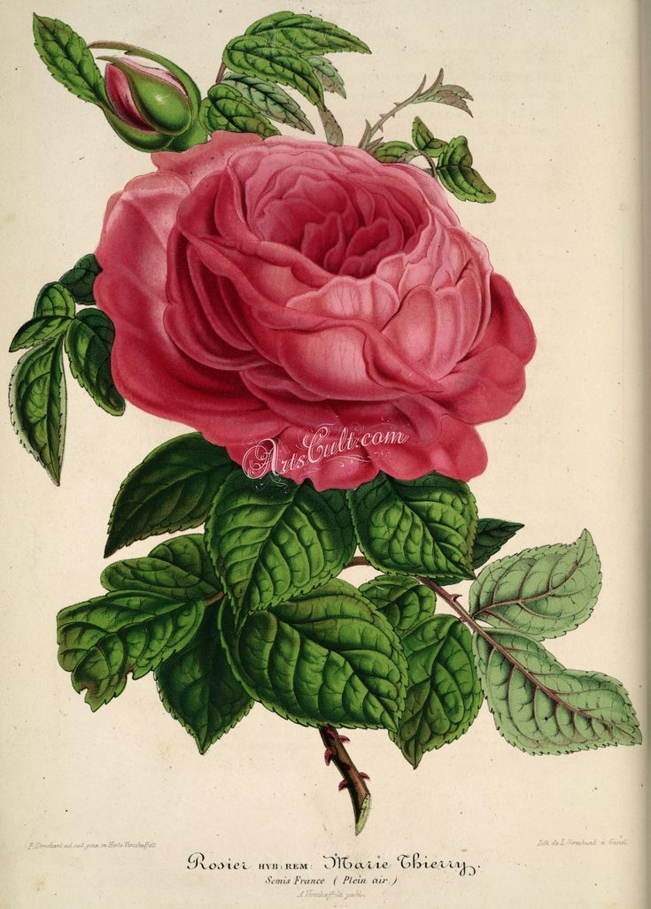 Rose Marie Thierry   ...