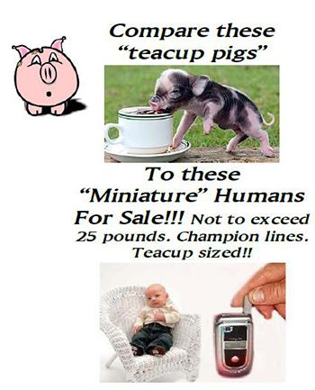 never buy a teacup pig.... unless you believe that a baby human will also stay under 25 lbs.