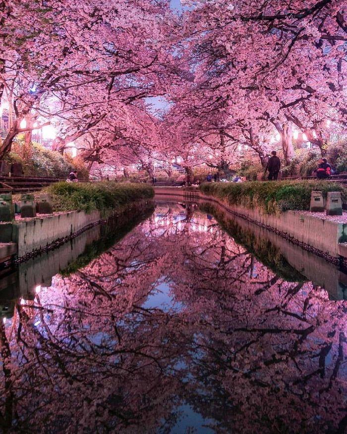 Saitama Japan Nature Photography Japan Photo Japan Travel