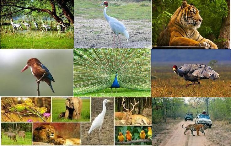 Tour of Bharatpur Birds Sanctuary