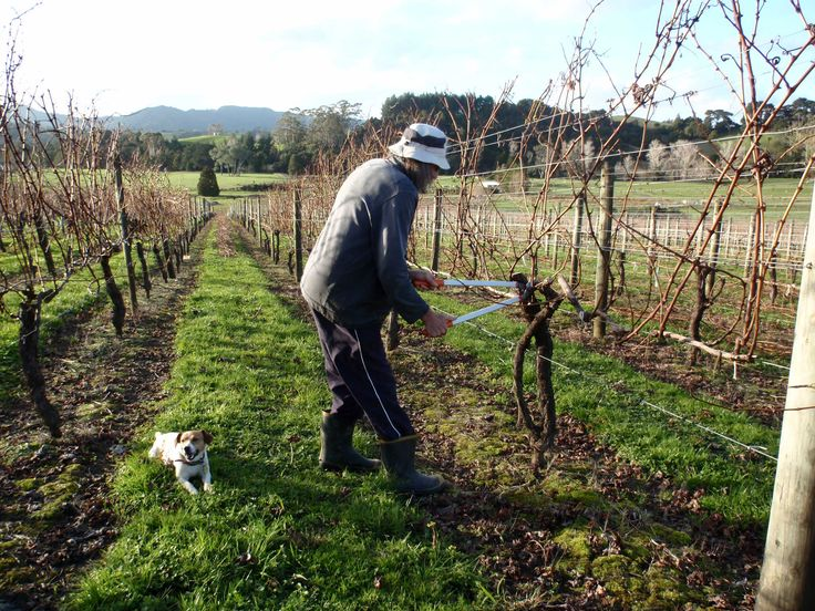 Pruning with the company of Vinnie