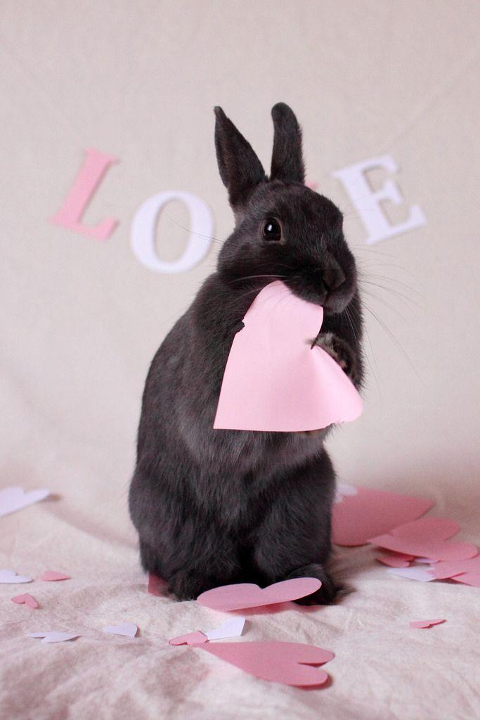 Bunny loves