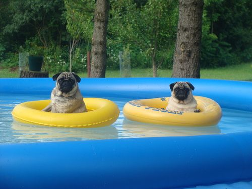 Come join us for a dip?