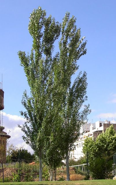 mejores 42 im genes de planta arbol cordoba argentina en