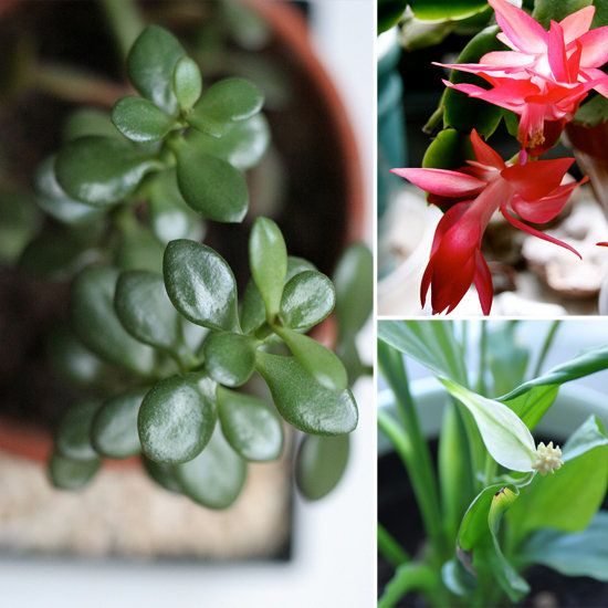 pleasurable low maintenance house plants. 5 Beautiful  Foolproof Houseplants We love having houseplants around but they never seem 131 best HOUSEPLANTS AND MORE images on Pinterest Shells Flower