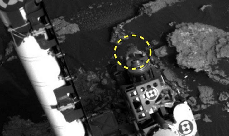 PROOF OF ALIENS? 'Lizard-like creature jumped on NASA Curiosity Rover on MARS'   Weird   News   Express.co.uk