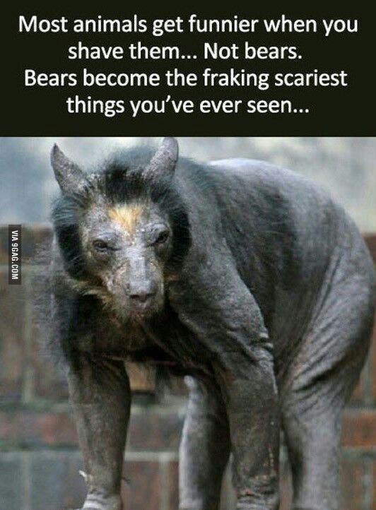 Bears, not a f**king joke! - 9GAG