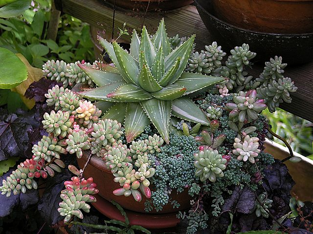 so many beautiful succulents out there