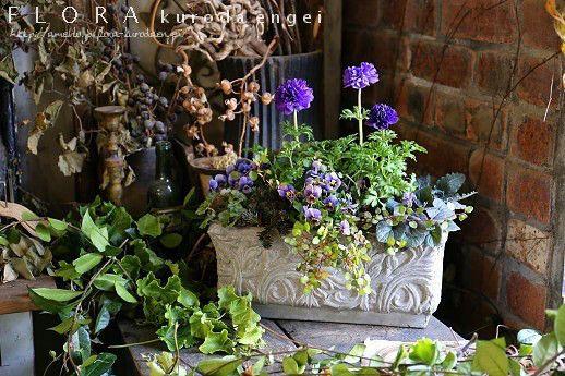 スタッフ募集とアネモネプランター寄せ植え の画像|フローラのガーデニング・園芸作業日記