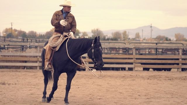 serpentines without reins--the importance of teaching a horse to bend to your legs