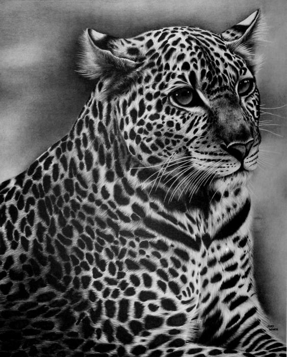 Furry Leopard - Pencil Drawing by Jerry Winick