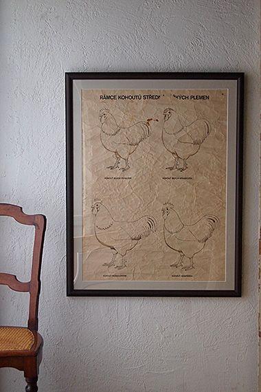 ニワトリ、畜産学の大きな額縁-vintage poster large frame 酪農・畜産学校で使われた鶏の品種を学ぶ教材、買付時かなり皺が寄っていたポスターを出来るだけ伸ばして額縁屋さんで額装して頂きました。紙全体落ち着いた紅茶色、スケッチ線、文字のみの色味がない雰囲気はチキンに因むお料理を看板としたレストラン等に、眺めても楽しいウォールデコレーションとして。元々のポスター紙上部に破れ穴が御座いまして、同じ紙で塞いでおります。ガラスが入っております。マット紙の内側、絵自体のサイズはw580 h760です。