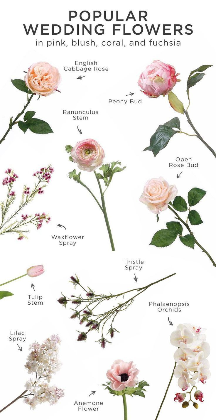Pink is perfect for any wedding Here is a list of the most popular wedding flowers in