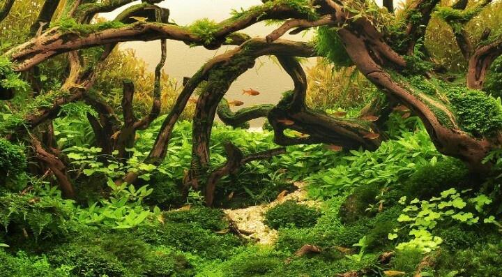 117 best Aquascarping images on Pinterest | Aquascaping ...