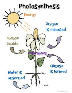This is a great achor chart for your plant life cycle unit. Print and display or project onto your SMARTBoard. Around the Kampfire: plantsAround the Kampfire: plants