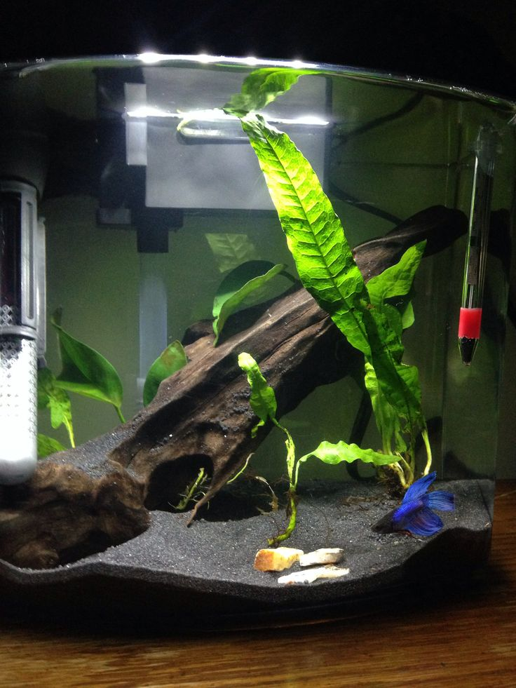 11 best betta tank ideas images on pinterest aquarium for Betta fish tank ideas