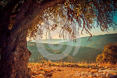 Picturesque view of hills behind old tree on sunny day.