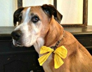 Share this: Yellow ribbon dogs send a safety message