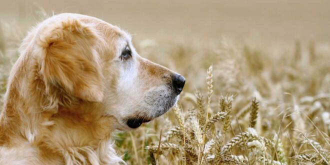The Cheapest No Grain Dog Food