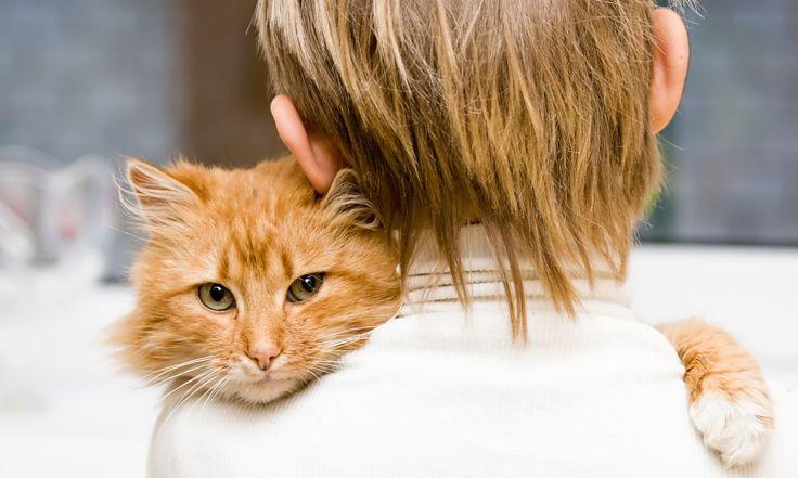 Взаимоотношения кошки и человека насчитывают несколько десятков лет, и за это время кошки научились не только радовать нас, но также и по-настоящему нами манипулировать. Ученые, тщательно рассмотрев поведение, а также проанализировав степень игривости кошек и общительность их хозяев, пришли к выводу, что кошки и люди имеют значительное влияние друг на друга. Так, например, максимальное единодушие […]