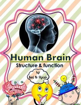 "Human Brain : Structure & FunctionsThis science unit is prepared to teach all about the Human Brain : Structure and Functions in the subject of biology. ""Human Brain : Structure & Functions"" includes key information and everything youll need to teach your students how does human brain work and what are the various parts and functions of it."
