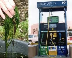 Learn about Biofuel Production and courses offered through Ed4Online
