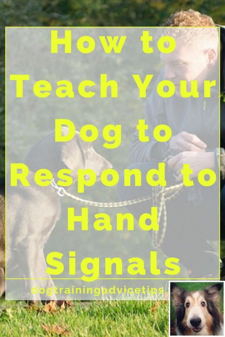 Can Your Dog Learn Obedience With Positive Reinforcement See