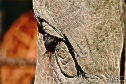 """""""Animals of Light"""" - Tutta la galleria su -> http://www.fotolibera.it/galleria/animals-of-light/"""