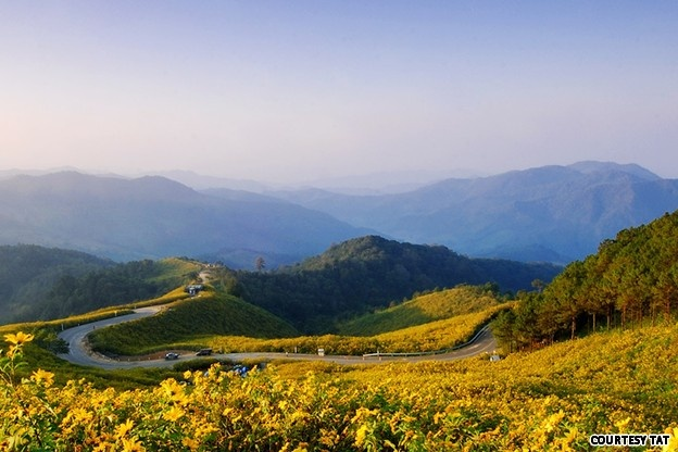 Whole lotta Thailand: 77 things to do in 77 provinces | CNNGo.com: Wild Flower, Domestic Travel, Hong Sons, Thailand Travel, Mae Hong, Flower Fields, Doi Mae, Area Thailand, Travel Buckets