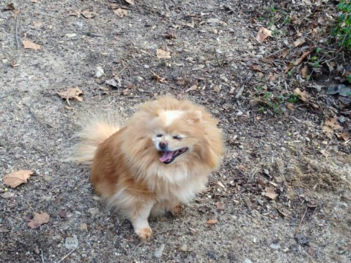 177 best *LOST & FOUND PETS IN S.C.* images on Pinterest ...