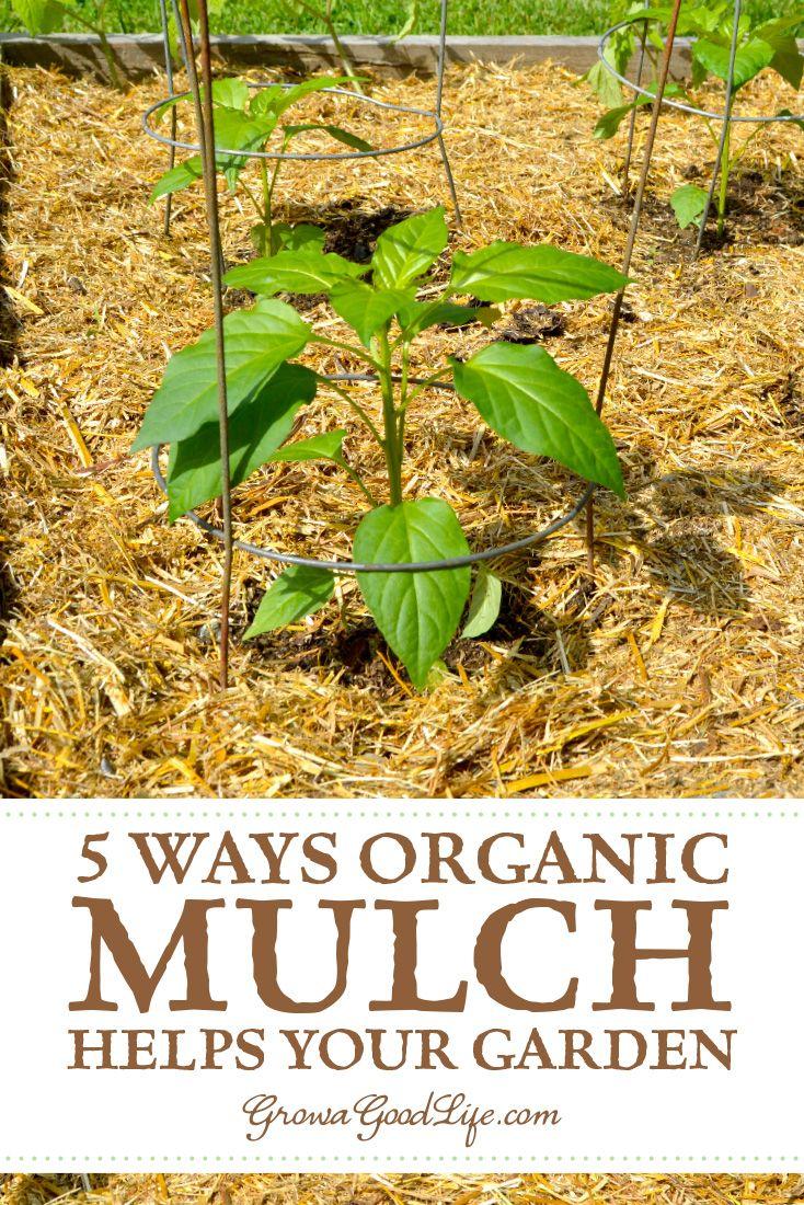 5 Ways Organic Mulch Helps Your Vegetable Garden Organic Mulch
