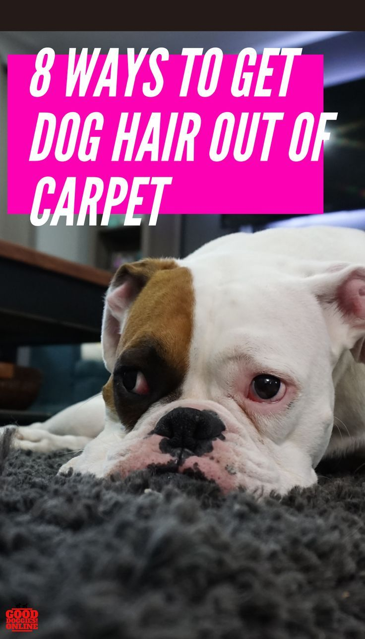 8 Best Ways To Remove Dog Hair From Carpet Good Doggies Online In 2020 Dog Hair Cleaning Dog Hair Good Doggies Online